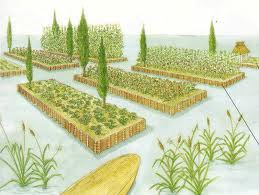 Highly productive and and economically important 'Chinampas'