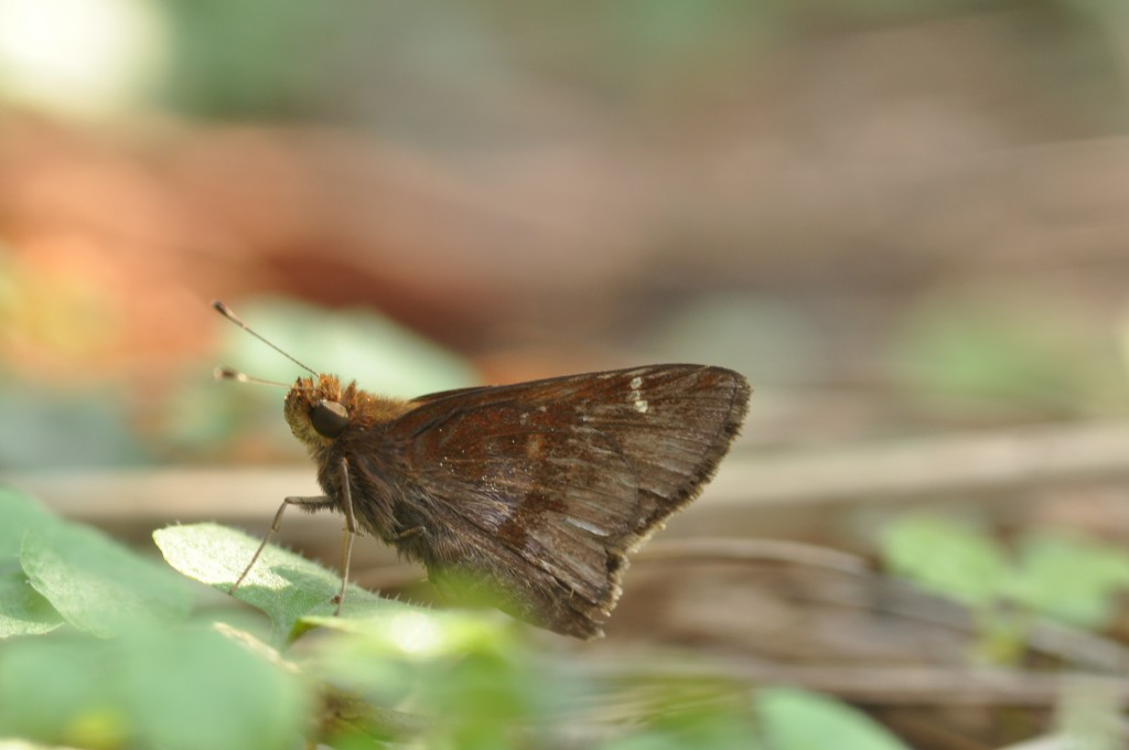 WKerlingcloudedskipper100513