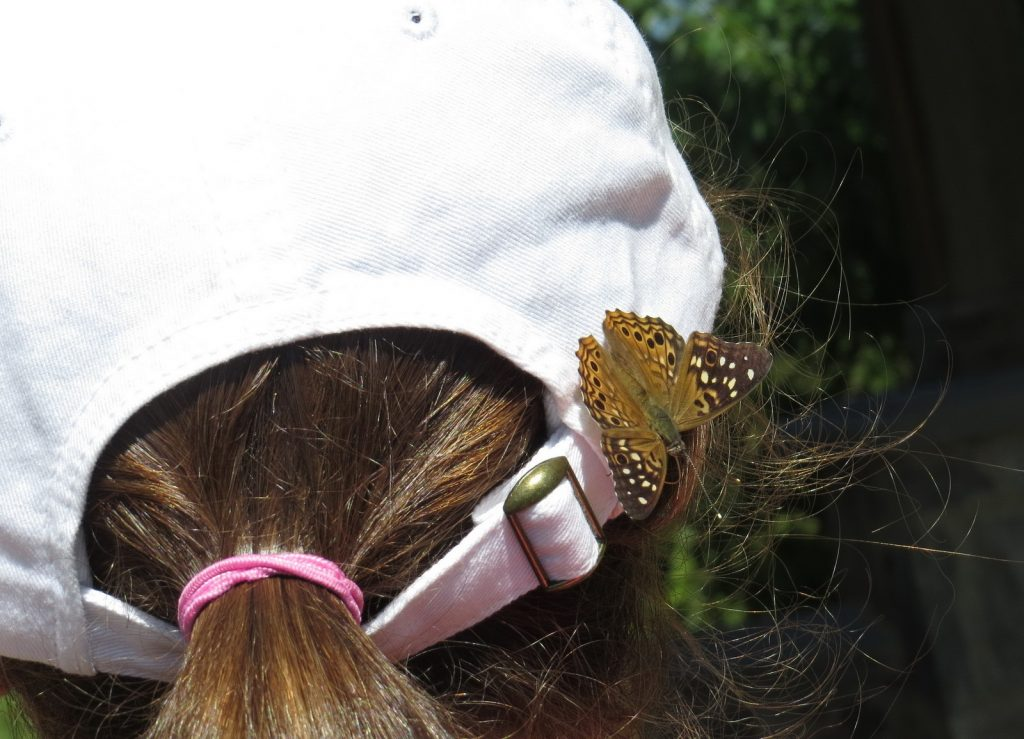 A hackberry emperor rode on this young field tripper's hat and arm for 45 minutes on a walk led by Jennifer Bulava on 8/15/16 at Boundary Creek, BUR.